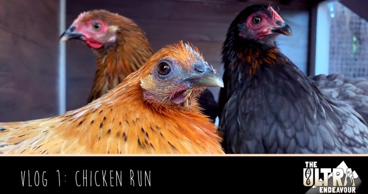 Vlog 1: Chicken Run